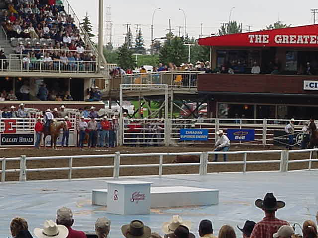 Next on the programme was the calf roping. A calf was released and a cowboy on his horse has to catch this calf and rope it down as fast as possible. Jeff didn<#k#>'t like this part very much.