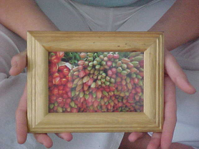 As the letmestayforaday-gift Lisbet Skytte received this framed picture of Dutch tullips from my previous host Ingrid van Vliet in �rhus.